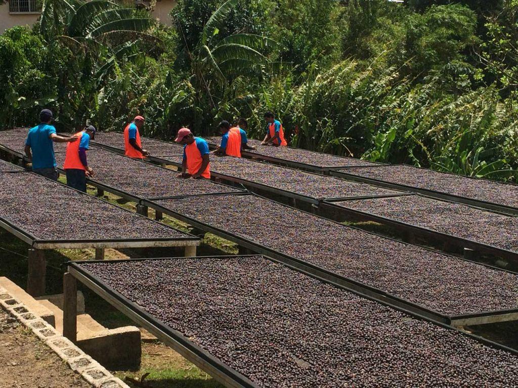 Las Lajas - lits africains de séchage